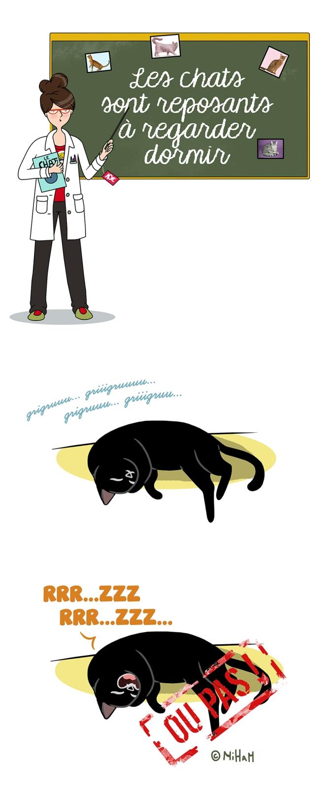 idée-reçue-sur-les-chats-dessin