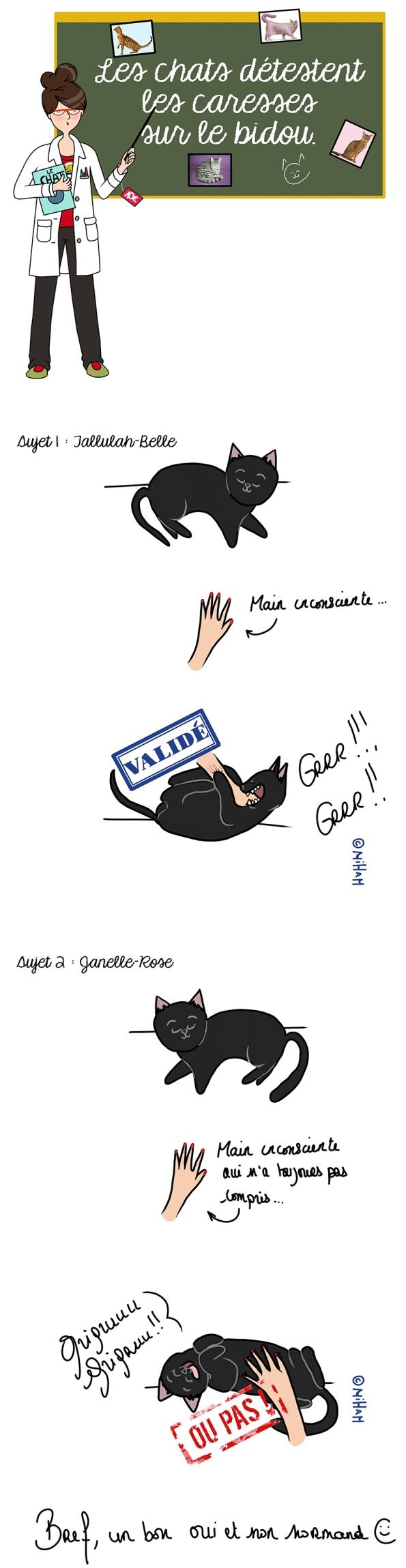 dessin-chat-miham-honfleur