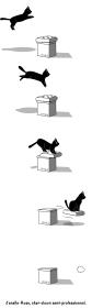 surfine-cat-miham